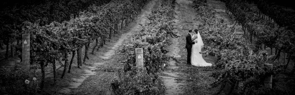 bride and groom in vines at perth winery