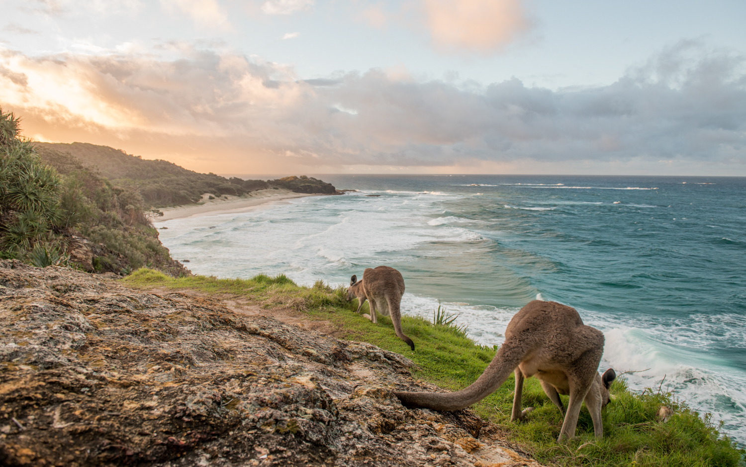 kangaroos over frenchman's beach