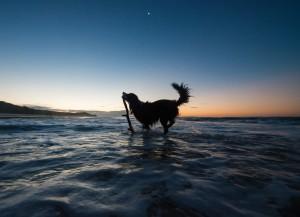 Chester on Flinders Beach North Stradbroke Island