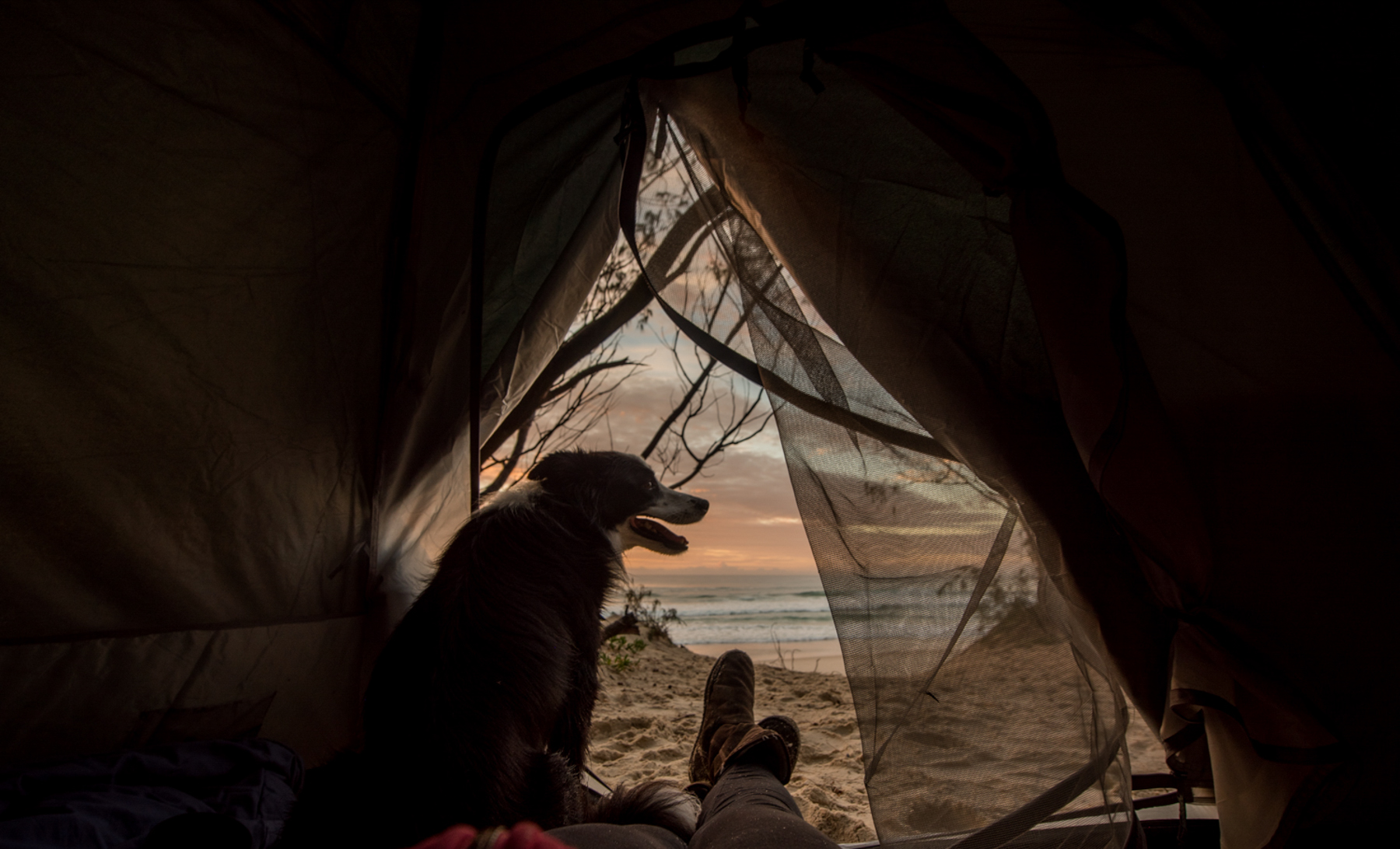 Beach camping with dog
