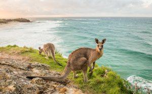North Stradbroke Island kangaroo on headland looking over Frenchmans beach | Stradbroke Island Photography