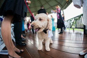Perth winery wedding photographer | Ang & Stu | Stradbroke Island Photography sittella