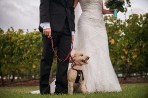 Perth winery wedding photographer | Ang & Stu | Stradbroke Island Photography