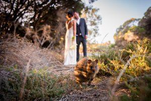 quokka island wedding photography | Western Australia Photographer | Stradbroke Island Photography